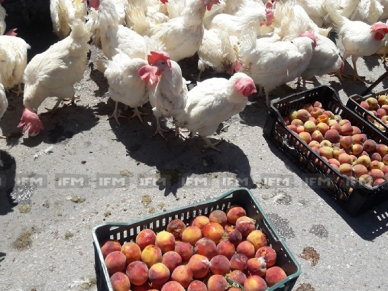 بالصور: الدجاج والفلاحون في وقفة احتجاجية أمام مقر وزارة التجارة