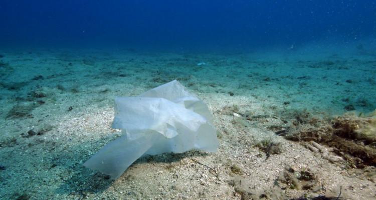 Le 8 juin est la Journée mondiale des océans