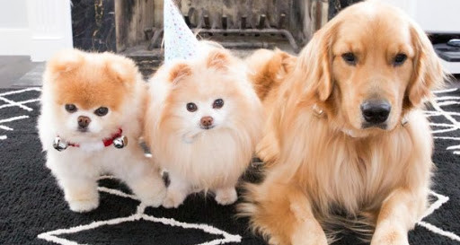 La journée mondiale des chiens