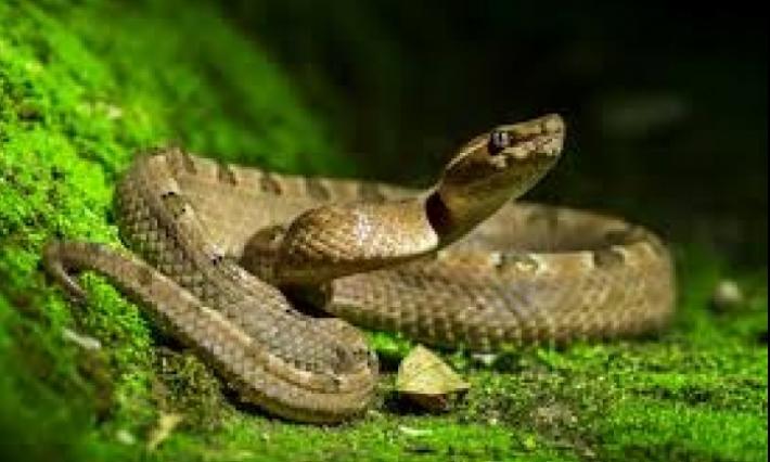 Journée mondiale des serpents