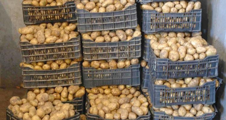 Kalâa Kobra : Saisie de 130 tonnes de pommes de terre