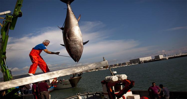 صيد التن