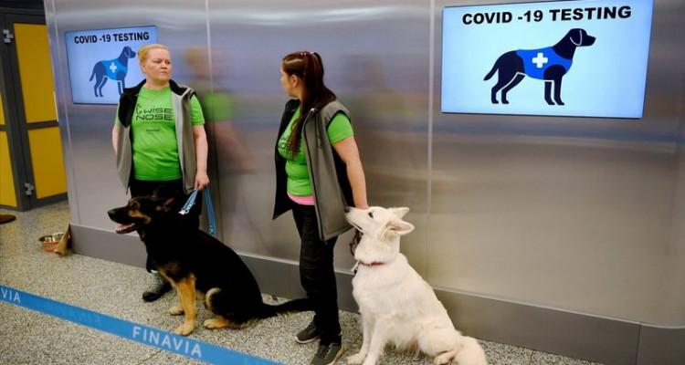 الكلاب وسيلة جديدة للكشف عن مصابي كورونا في المطارات (صور)