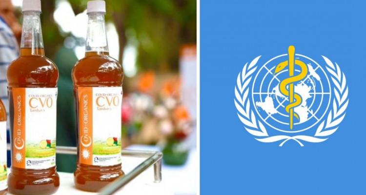 منظمة الصحة العالمية تلجأ للأعشاب الطبية الأفريقية كعلاج لكورونا
