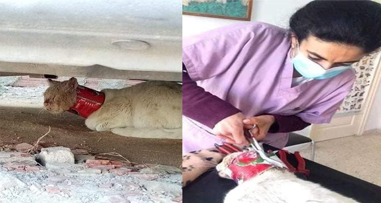 قطة علبة طماطم سوسة