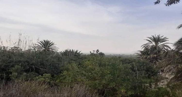 نبيل زايدي: عنا منطقة عين السلطان أصبحت ترمز للأسف لشرب القوارص