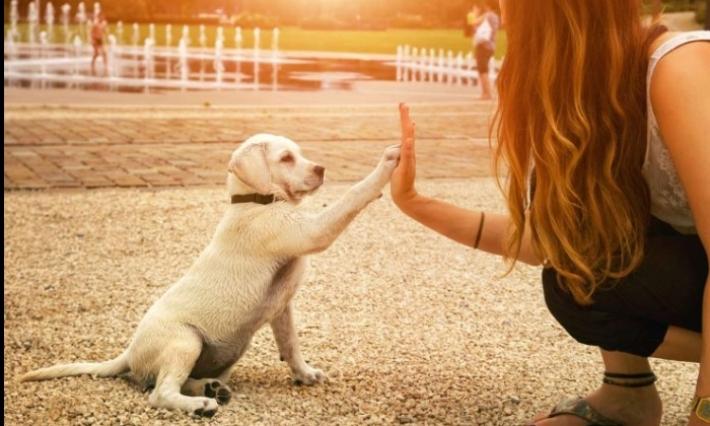 Aujourd'hui, célébrons les chiens!!!