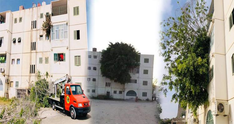 ليبيا: اقتلاع شجرة نبتت بشرفة إحدى العمارات