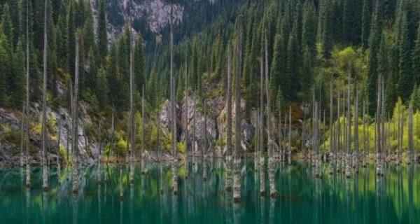 إعصار يكشف أقدم غابة تحت الماء لم يصلها البشر منذ 60 ألف عام  تحوي خزاناً محتملاً لأدوية السرطان ومضادات الآلام