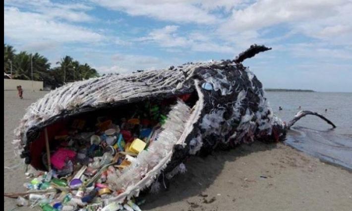 Choquant : Une baleine échouée au bord d'une plage, la mâchoire pleine de déchets